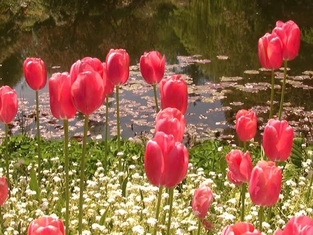 wpid-flower-comp-2008-09-18-11-57.jpg