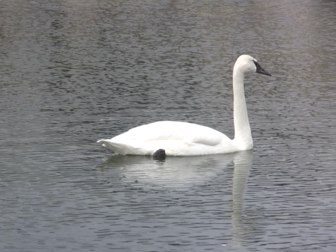 wpid-still-swan-2008-09-15-15-23.png